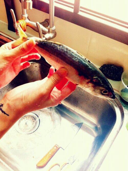 kampung_fish.jpg